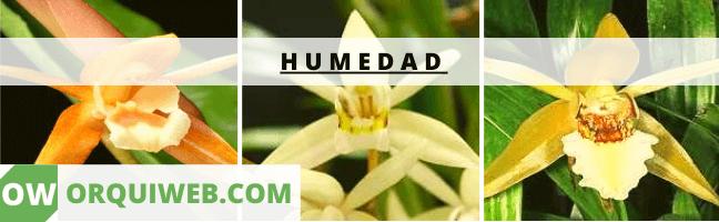 HUMIDAD