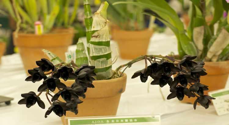 Las-orquideas-mas-raras-del-mundo