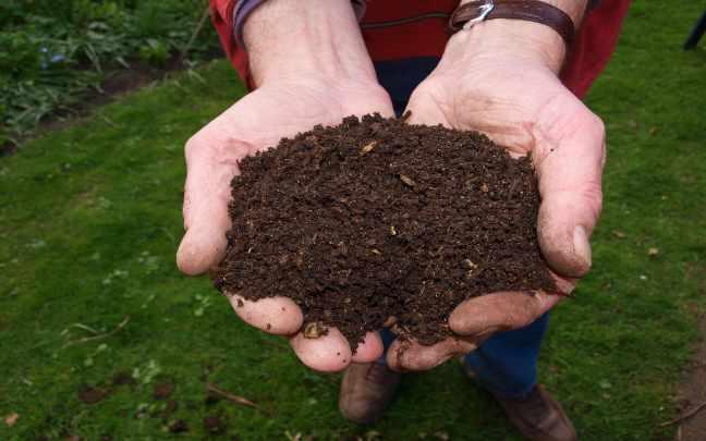 Que-fertilizante-usar
