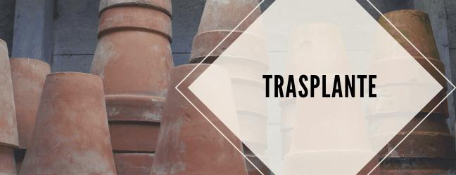 TRASPLANTE-1